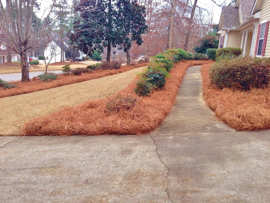 Mulch Pine Straw In Conyers Brightside Landscapes Llc
